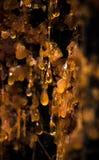 A seiva alaranjada brilhante goteja abaixo do interior de uma árvore fotografia de stock royalty free