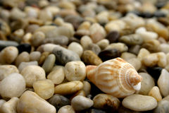 Seixo e seashell Foto de Stock Royalty Free