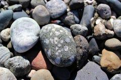 Seixos da praia Fotografia de Stock