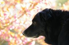 Seizoen: de lente, hond Stock Foto