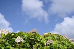 Seizoen van geld Stock Foto