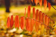 Seizoen van mooie de herfstbladeren Stock Foto