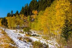 Seizoen veranderend, eerste sneeuw en de herfstbomen Royalty-vrije Stock Fotografie