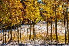 Seizoen veranderend, eerste sneeuw en de herfstbomen Royalty-vrije Stock Afbeelding