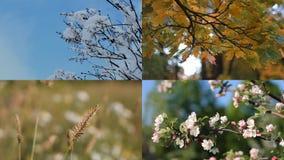Seizoenen - collage met het beeld van aard in verschillende tijden stock videobeelden