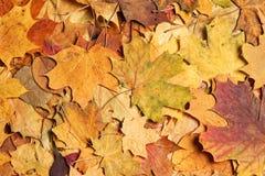 Seizoengebonden de herfstachtergrond van kleurrijke bladeren Stock Afbeelding