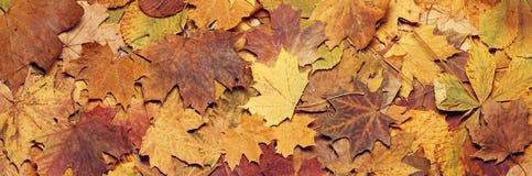 Seizoengebonden de herfstachtergrond van kleurrijke bladeren Stock Foto