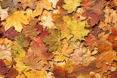 Seizoengebonden de herfstachtergrond van kleurrijke bladeren Stock Fotografie