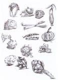 Seizoengebonden groenten Royalty-vrije Stock Afbeelding
