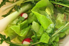 Seizoengebonden salade Royalty-vrije Stock Afbeelding