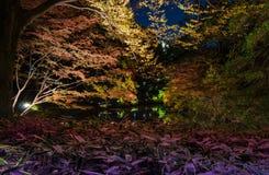 Seizoengebonden verlichting bij Rikugien-Tuin stock fotografie