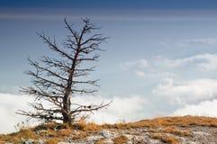 Seja única árvore Foto de Stock