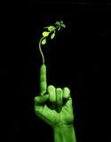 Seja verde Fotografia de Stock Royalty Free