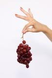 Sejeción de las uvas Fotos de archivo