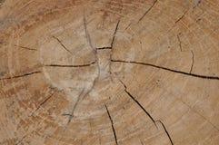 Sekcja drzewny bagażnik zdjęcia royalty free