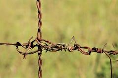 Sekcja Ośniedziały drutu kolczastego zakończenie zdjęcie stock