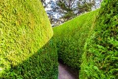 Sekcja zielony plenerowy labirynt fotografia royalty free