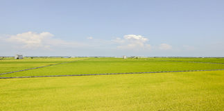Sekinchan Fotografia Stock