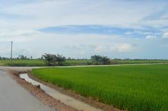 Sekinchan Padi领域 图库摄影
