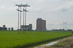 Sekinchan Padi Field Photographie stock libre de droits