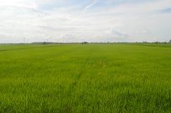 Sekinchan Padi Field Photos libres de droits