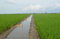 Sekinchan Padi Field Images libres de droits