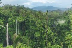 Sekumpul瀑布在密林用落在石峭壁和绿色树的清楚的水所有,巴厘岛,印度尼西亚 库存图片
