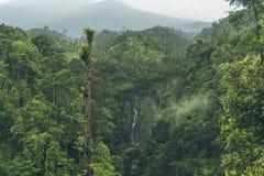 Sekumpul vattenfall i djungeln med klart vatten som lite varstans faller på stenklippor och gröna träd, Bali, Indonesien Arkivfoto