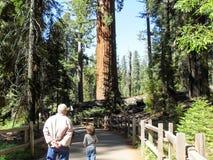 Sekwoja parka narodowego przespacerowanie przez lasu zdjęcia royalty free