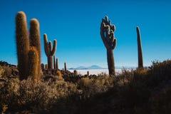 Sel d'altiplano de Salar de uyuni Bolivie plat photographie stock libre de droits