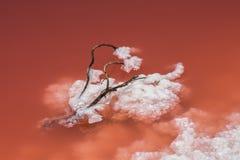 Sel dans l'eau rouge Photos libres de droits