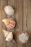 Sel et coquille de mer sur un bois Images stock