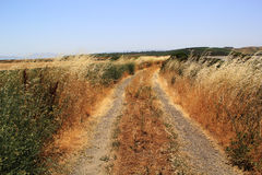 Sel Marsh Grass de Napa Valley Photo stock