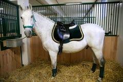 Sela de couro bonita para esportes equestres a cavalo Imagem de Stock Royalty Free