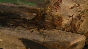 Selando uma junção de pesca da canoa, Ngapali, Myanmar filme