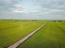 Selangor Malaysia November 15, 2017: Flyg- sikt av risfältfältet på Sungai Sireh, Kuala Selangor Royaltyfria Bilder