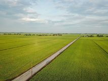 Selangor, Malesia 15 novembre 2017: Vista aerea della risaia a Sungai Sireh, Kuala Selangor immagini stock libere da diritti