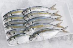 selar рыб kuning Стоковые Изображения RF