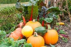 Selbst erzeugtes Gemüse Stockfoto