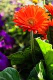 Selbst gemachte Blumen Lizenzfreie Stockfotos
