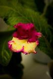 Selbst gemachte Blumen als Geschenk Stockbild