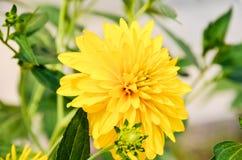 Selbst gemachte gelbe Blumen Lizenzfreie Stockbilder