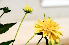 Selbst gemachte gelbe Blumen stockfotografie
