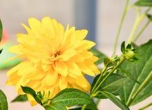Selbst gemachte gelbe Blumen Lizenzfreies Stockbild