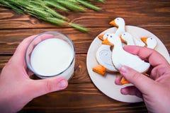Selbst gemachte Ingwerplätzchenente formte und Glas Milch auf Holztisch mit dem Ohr des Weizens mit dem Arm des Mannes Stockbild