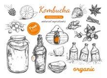 Selbst gemachte Teesammlung Kombucha Vektorhand gezeichnete Abbildung vektor abbildung