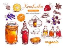 Selbst gemachte Teesammlung Kombucha Vektorhand gezeichnete Abbildung stock abbildung