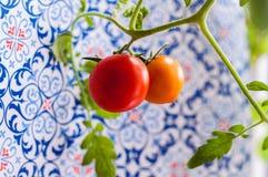 Selbst gemachte Tomate auf einer Niederlassung Stockbild