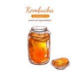 Selbst gemachter Tee Kombucha Vektorhand gezeichnete Abbildung Stockbild