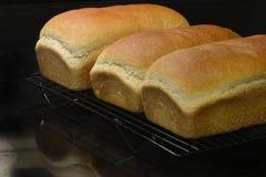 Selbst gemachtes frisches Brot Lizenzfreies Stockbild
